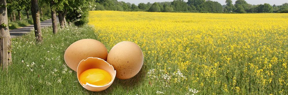 Gutshof-Ei - Das Ei